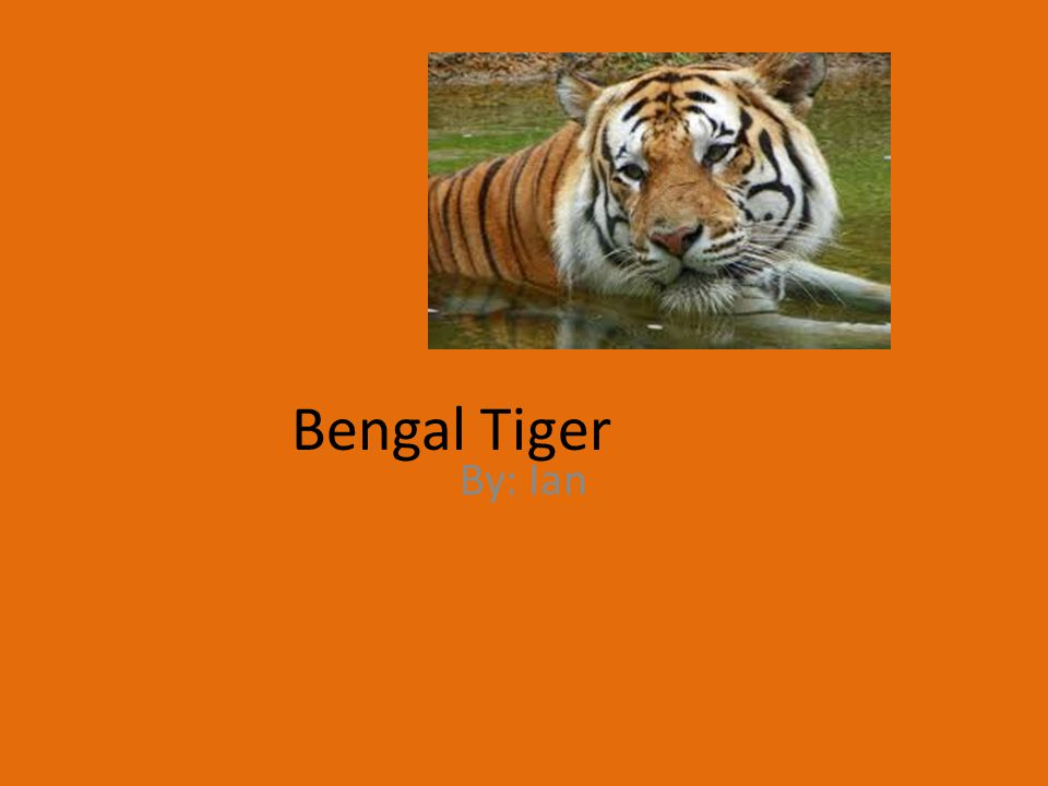Bengal Tiger By: Ian