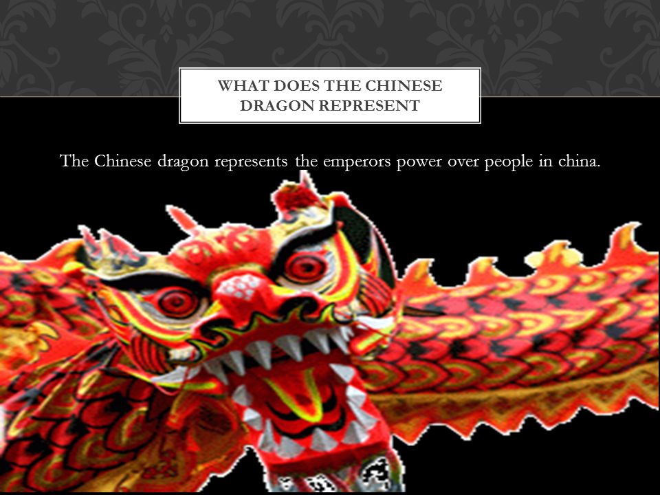 The Chinese dragon is one of the 12 Chinese new years also the people of China dress up in a dragon.