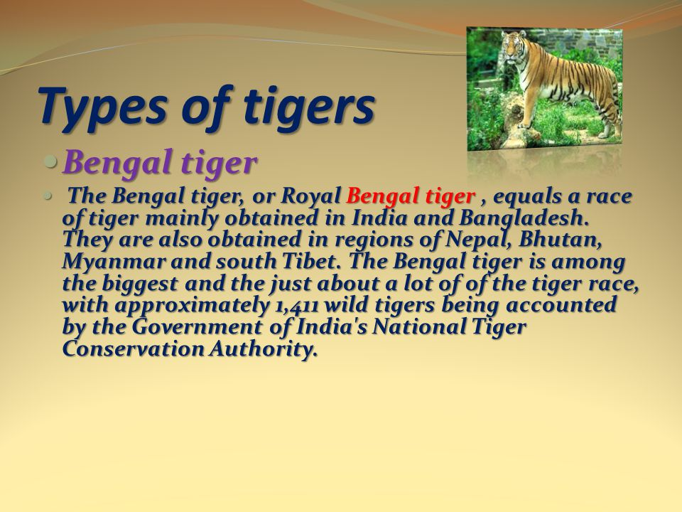 Types of tigers Bengal tiger Bengal tiger The Bengal tiger, or Royal Bengal tiger, equals a race of tiger mainly obtained in India and Bangladesh.