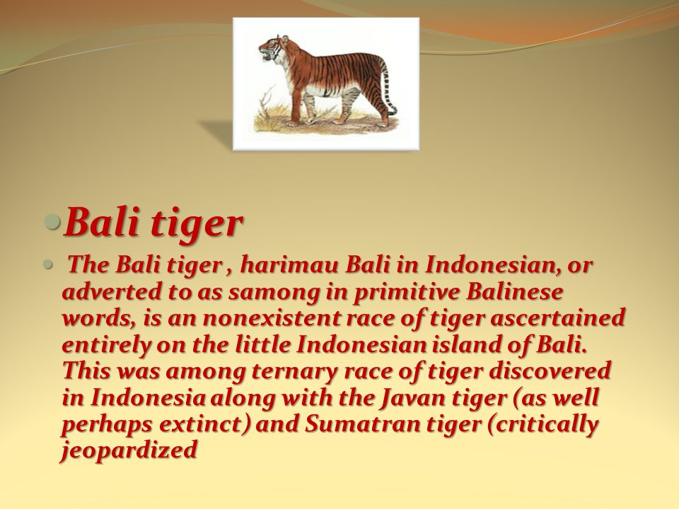Bali tiger Bali tiger The Bali tiger, harimau Bali in Indonesian, or adverted to as samong in primitive Balinese words, is an nonexistent race of tiger ascertained entirely on the little Indonesian island of Bali.