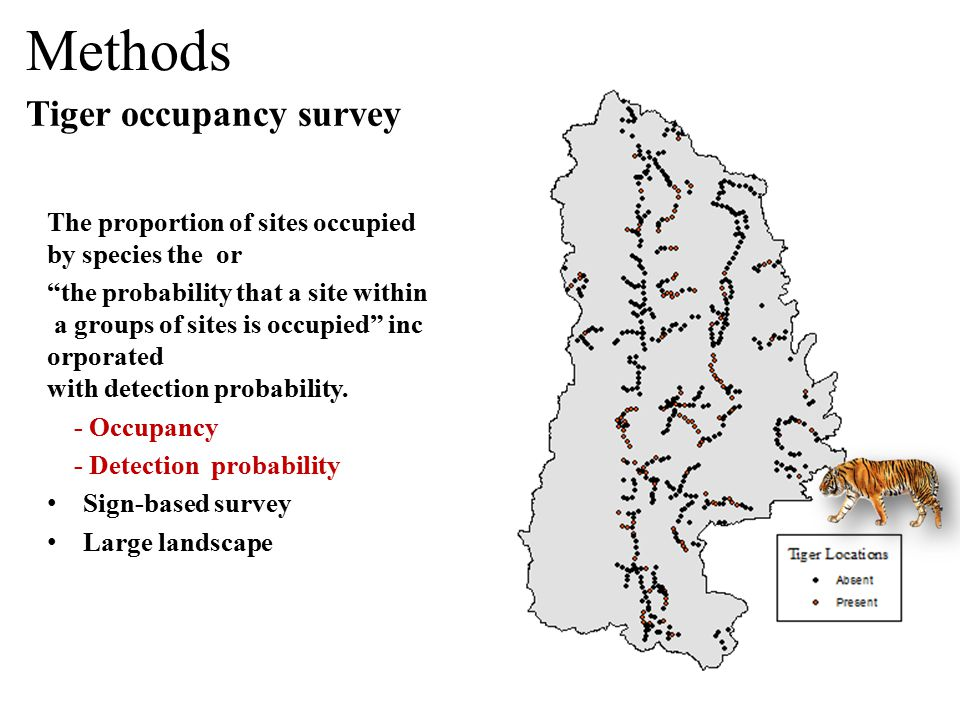 Tiger occupancy survey Methods The proportion of sites occupied by species the or the probability that a site within a groups of sites is occupied inc orporated with detection probability.