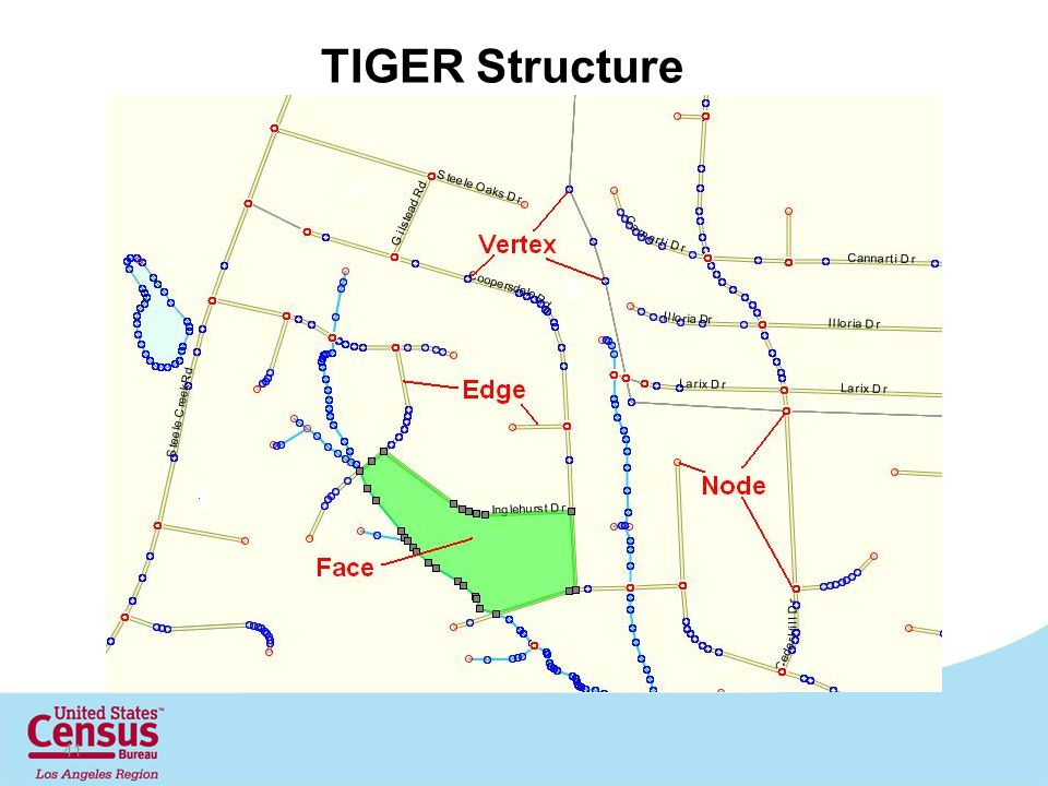 41 TIGER Structure