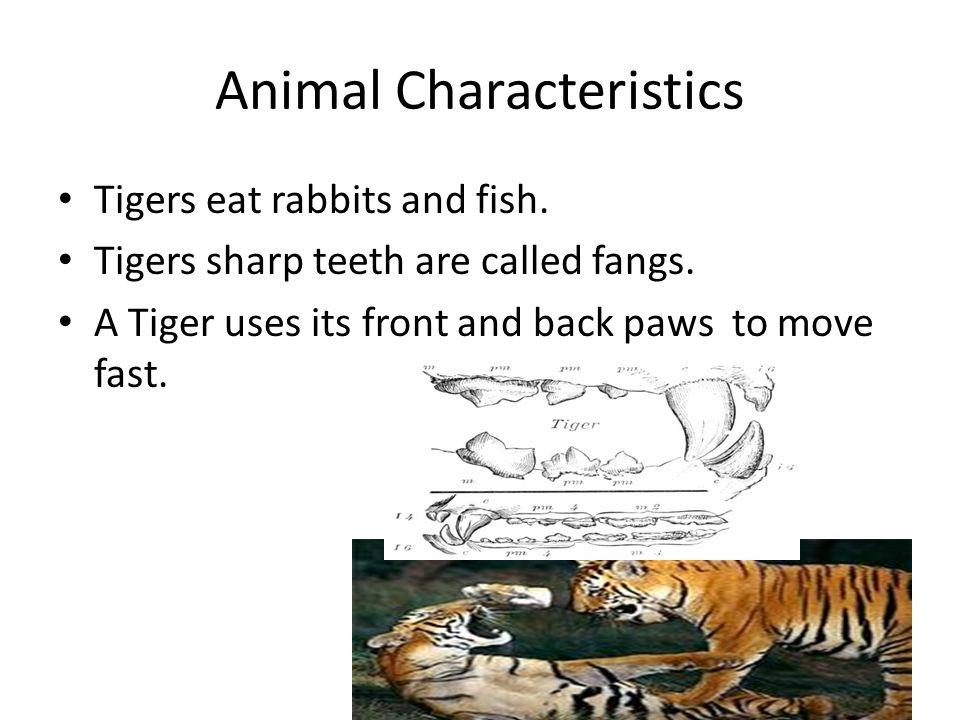 Animal Characteristics Tigers eat rabbits and fish.