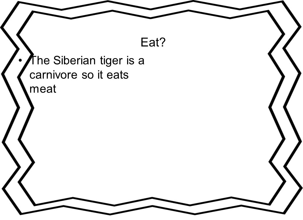 Eat? The Siberian tiger is a carnivore so it eats meat