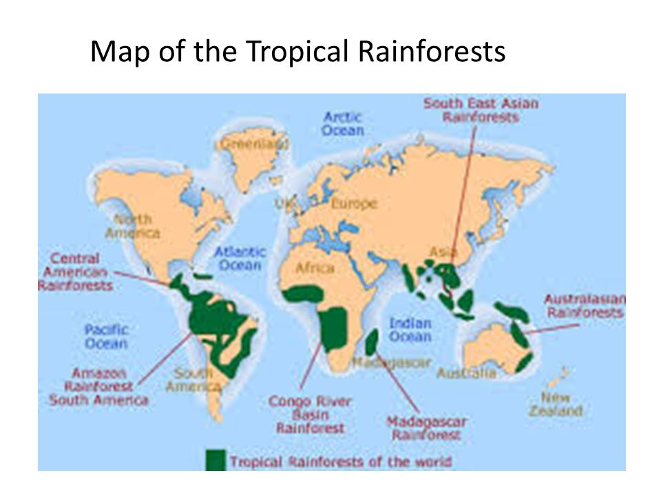 Map of the Tropical Rainforests