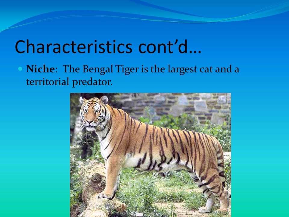 Characteristics cont'd… Range: They will travel several miles to find prey and will also stray from their marked territory for it.