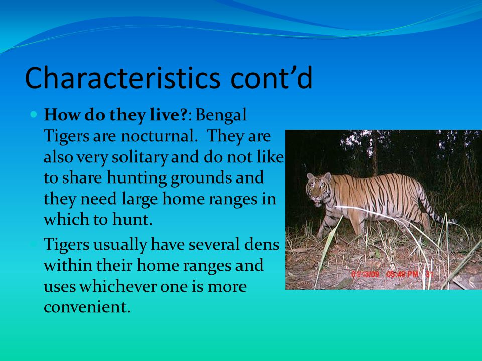 Characteristics cont'd… Eating Habits: Bengal Tigers are equipped to hunt down and kill their pray fast.