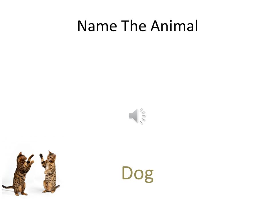 Free PowerPoint Quizzes Name The Animal Birds