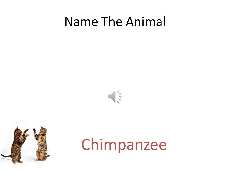 Free PowerPoint Quizzes Name The Animal Dog