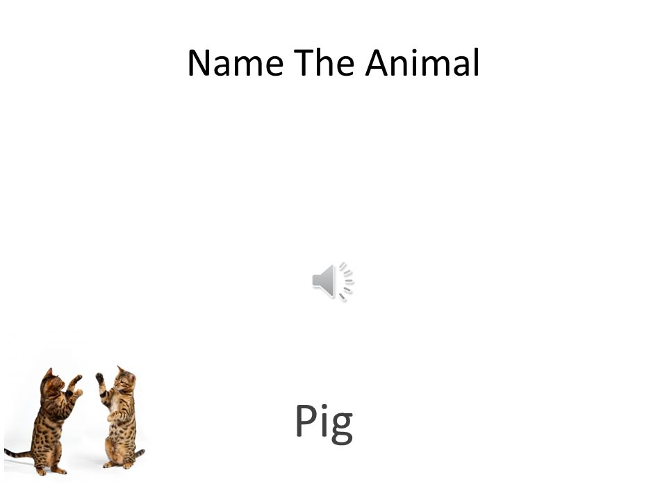 Free PowerPoint Quizzes Name The Animal Bees