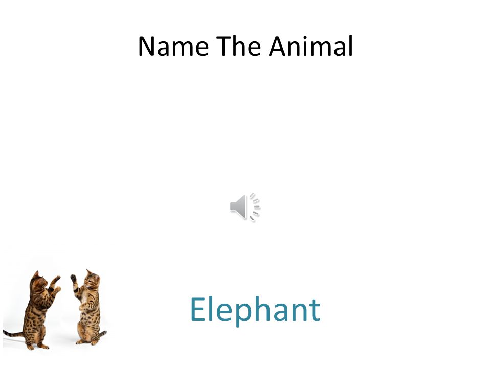 Free PowerPoint Quizzes Name The Animal Sheep