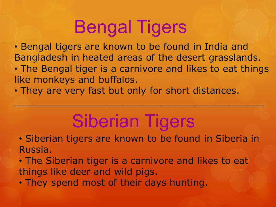 There are six types of tigers: Bengal Tigers Siberian Tigers Sumatran Tigers Malayan Tigers Indochinese Tigers South China Tigers