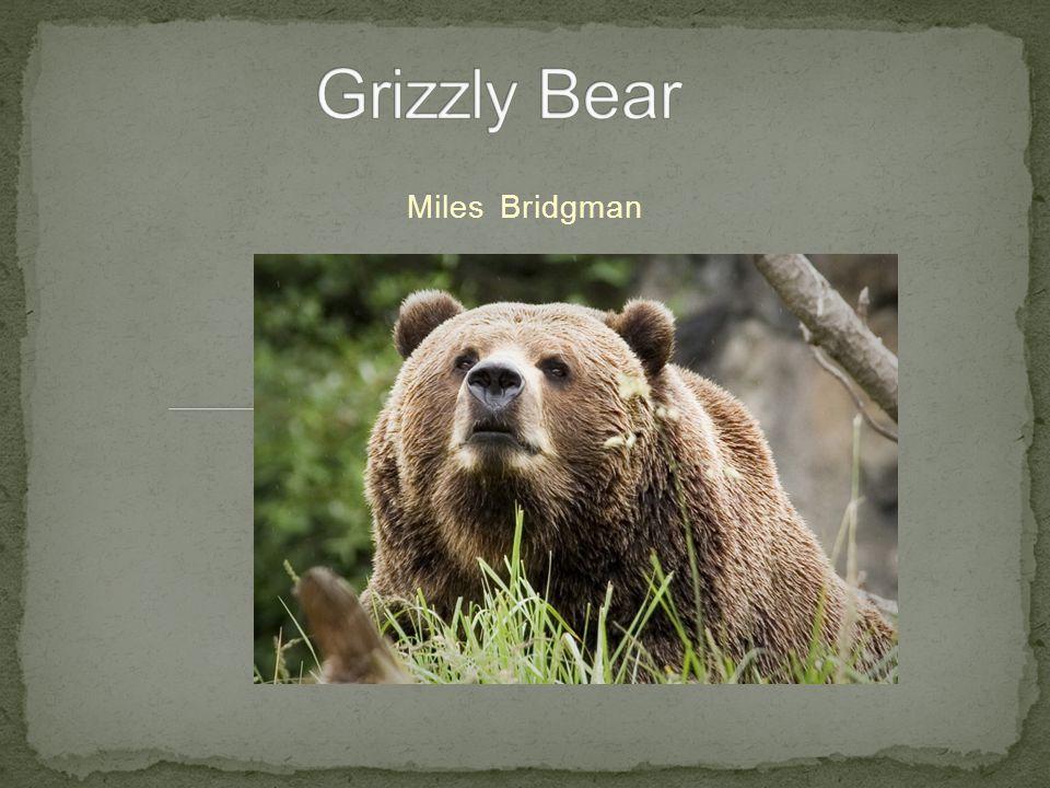 Miles Bridgman