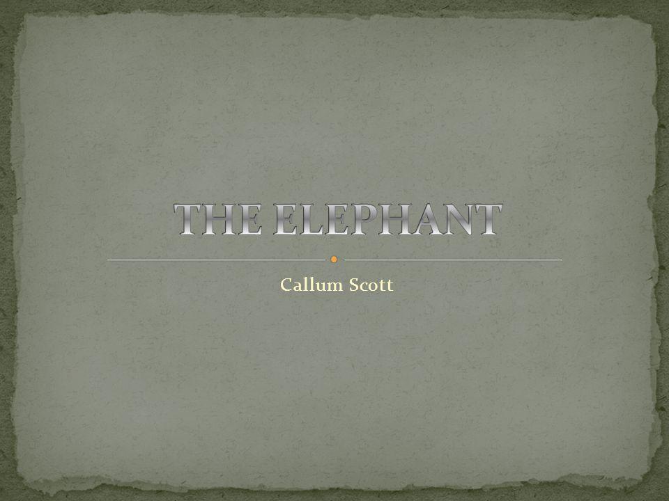 Callum Scott