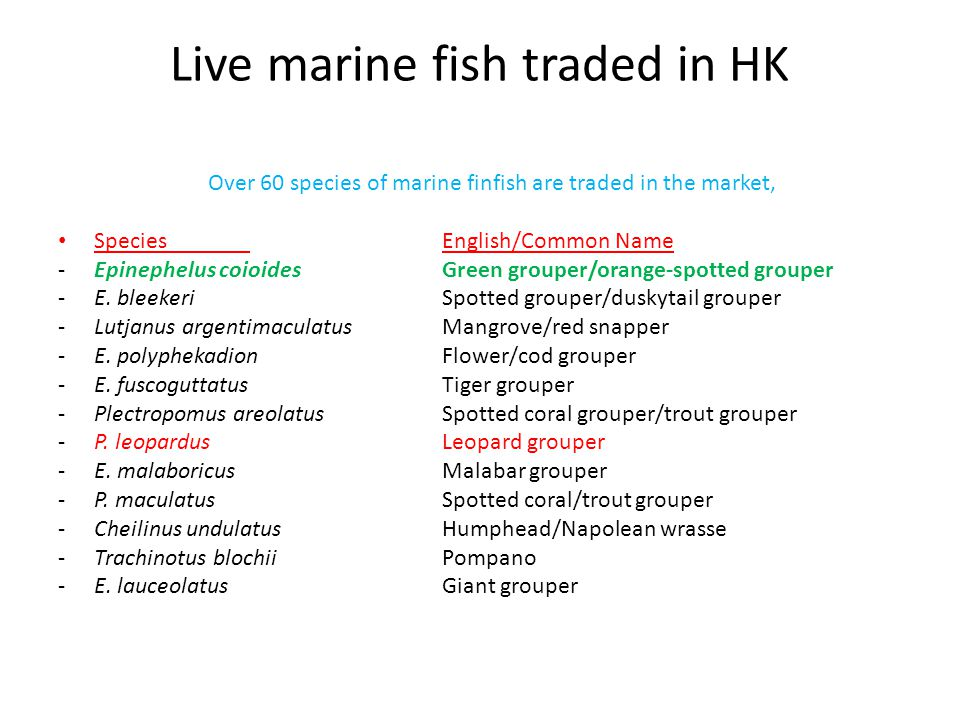 Live marine fish traded in HK Over 60 species of marine finfish are traded in the market, SpeciesEnglish/Common Name -Epinephelus coioidesGreen grouper/orange-spotted grouper -E.