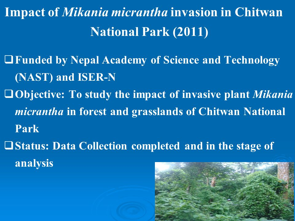Impact of Mikania micrantha invasion in Chitwan National Park (2011)  Funded by Nepal Academy of Science and Technology (NAST) and ISER-N  Objective: To study the impact of invasive plant Mikania micrantha in forest and grasslands of Chitwan National Park  Status: Data Collection completed and in the stage of analysis