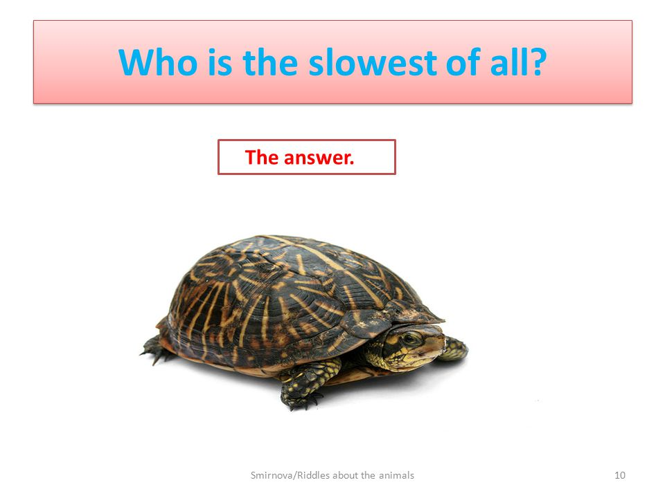 Who is the slowest of all? The answer. 10Smirnova/Riddles about the animals