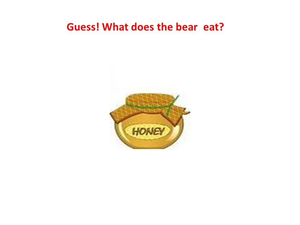 Guess! What does the bear eat? h ey