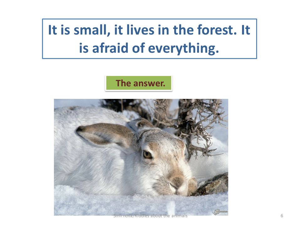 -I can go without food and water for a long time. The answer. 7Smirnova/Riddles about the animals