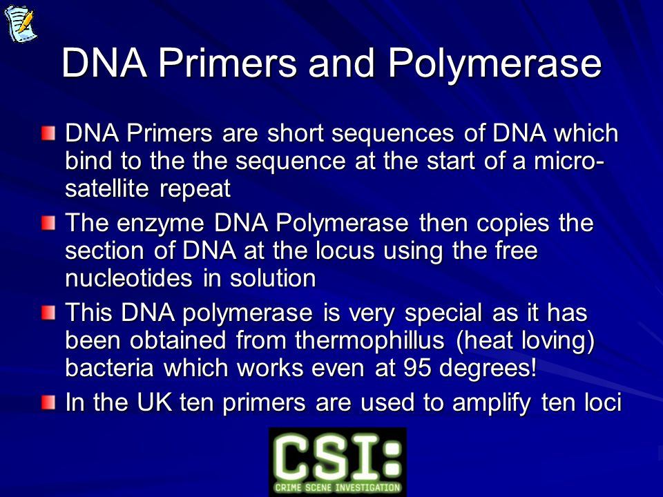 DNA Primers and Polymerase DNA Primers are short sequences of DNA which bind to the the sequence at the start of a micro- satellite repeat The enzyme