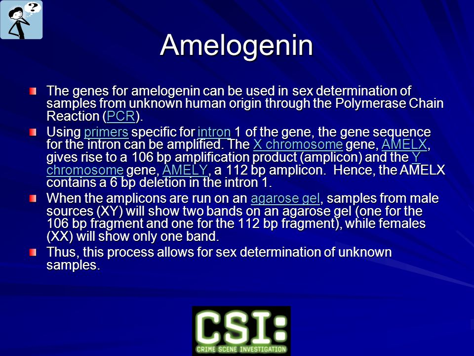 Amelogenin The genes for amelogenin can be used in sex determination of samples from unknown human origin through the Polymerase Chain Reaction (PCR).