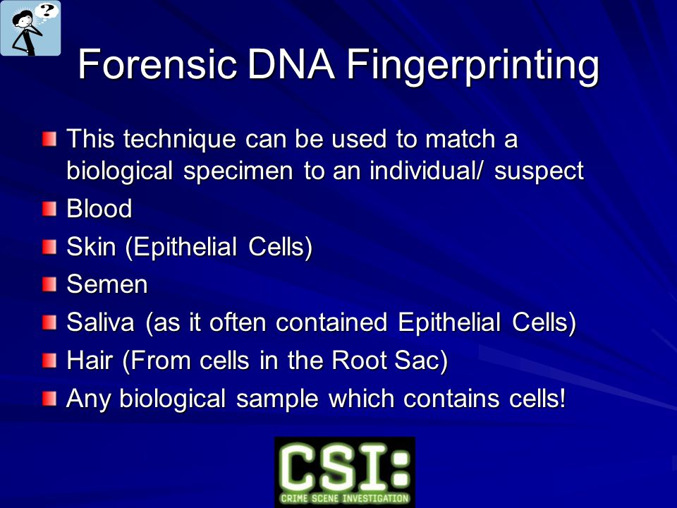 Forensic DNA Fingerprinting This technique can be used to match a biological specimen to an individual/ suspect Blood Skin (Epithelial Cells) Semen Saliva (as it often contained Epithelial Cells) Hair (From cells in the Root Sac) Any biological sample which contains cells!