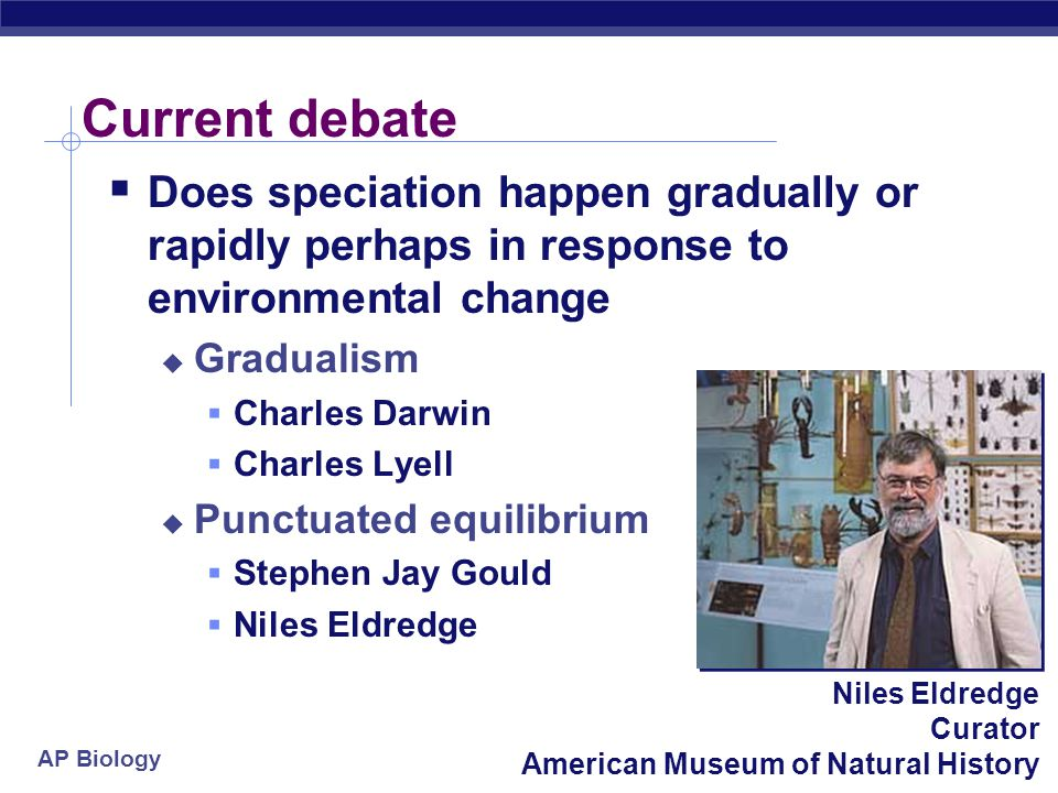 AP Biology Niles Eldredge Curator American Museum of Natural History Current debate  Does speciation happen gradually or rapidly perhaps in response to environmental change  Gradualism  Charles Darwin  Charles Lyell  Punctuated equilibrium  Stephen Jay Gould  Niles Eldredge