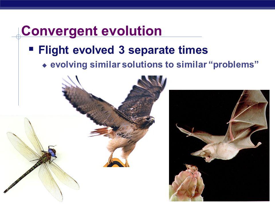 AP Biology Convergent evolution  Flight evolved 3 separate times  evolving similar solutions to similar problems