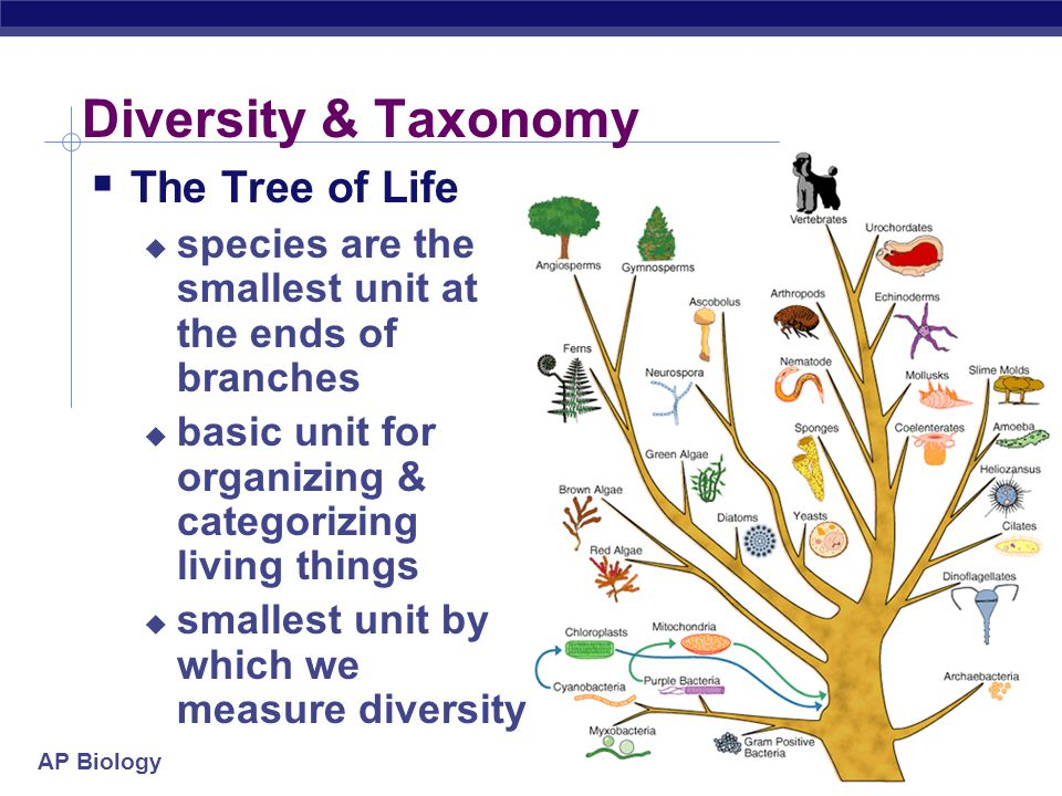 AP Biology Diversity & Taxonomy  The Tree of Life  species are the smallest unit at the ends of branches  basic unit for organizing & categorizing living things  smallest unit by which we measure diversity