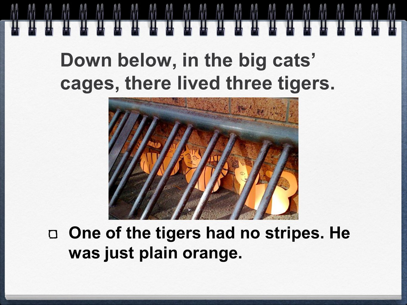 Down below, in the big cats' cages, there lived three tigers. One of the tigers had no stripes. He was just plain orange.