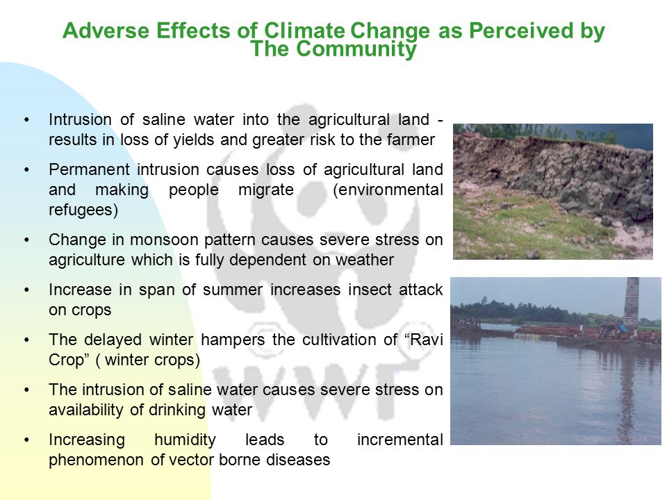 Adverse Effects of Climate Change as Perceived by The Community Intrusion of saline water into the agricultural land - results in loss of yields and greater risk to the farmer Permanent intrusion causes loss of agricultural land and making people migrate (environmental refugees) Change in monsoon pattern causes severe stress on agriculture which is fully dependent on weather Increase in span of summer increases insect attack on crops The delayed winter hampers the cultivation of Ravi Crop ( winter crops) The intrusion of saline water causes severe stress on availability of drinking water Increasing humidity leads to incremental phenomenon of vector borne diseases