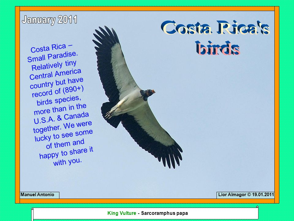 Costa Rica – Small Paradise. Relatively tiny Central America country but have record of (890+) birds species, more than in the U.S.A. & Canada togethe