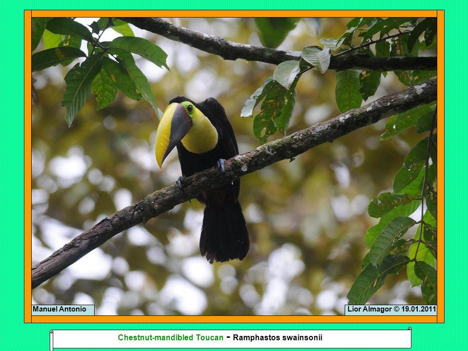Lior Almagor © 18.01.2011Lior Almagor © 20.01.2011Corcovado Scarlet Macaw - Ara macaw