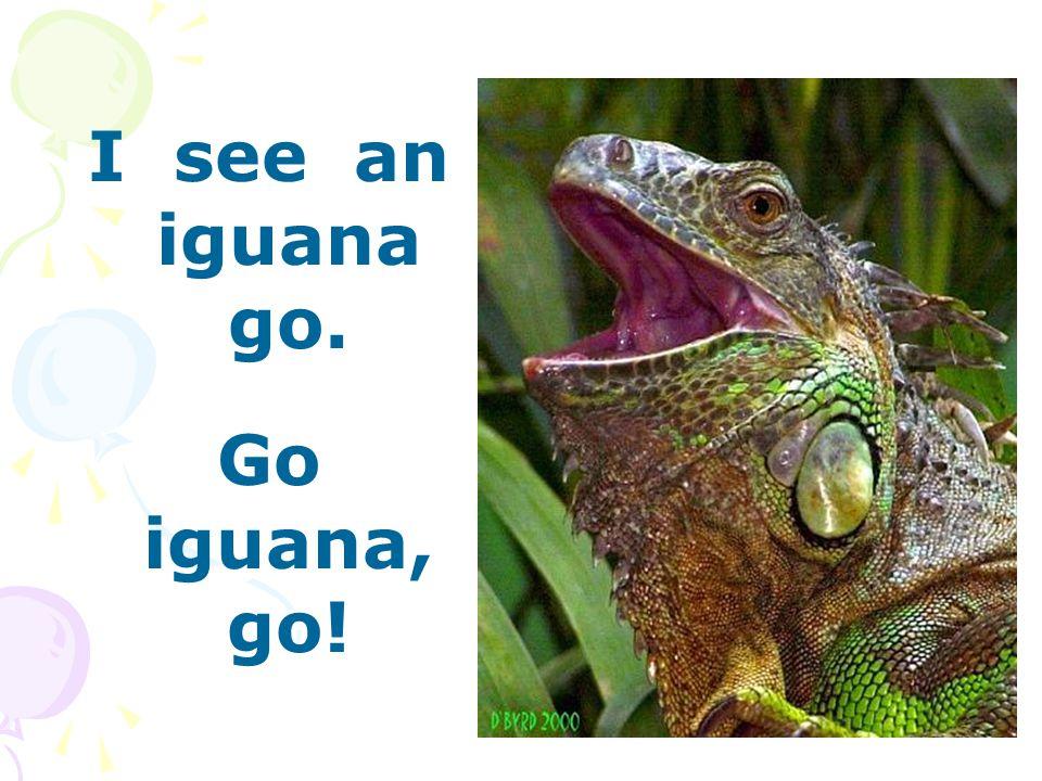I see an iguana go. Go iguana, go!