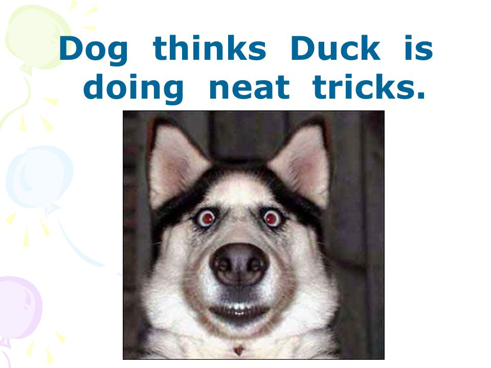 Dog thinks Duck is doing neat tricks.