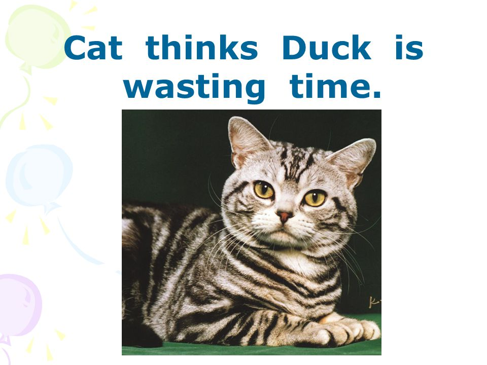 Cat thinks Duck is wasting time.