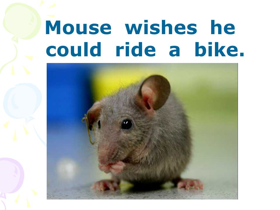 Mouse wishes he could ride a bike.