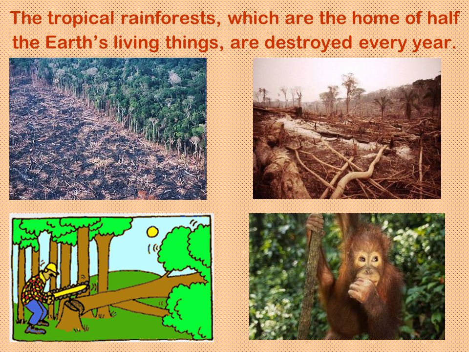 The tropical rainforests, which are the home of half the Earth's living things, are destroyed every year.