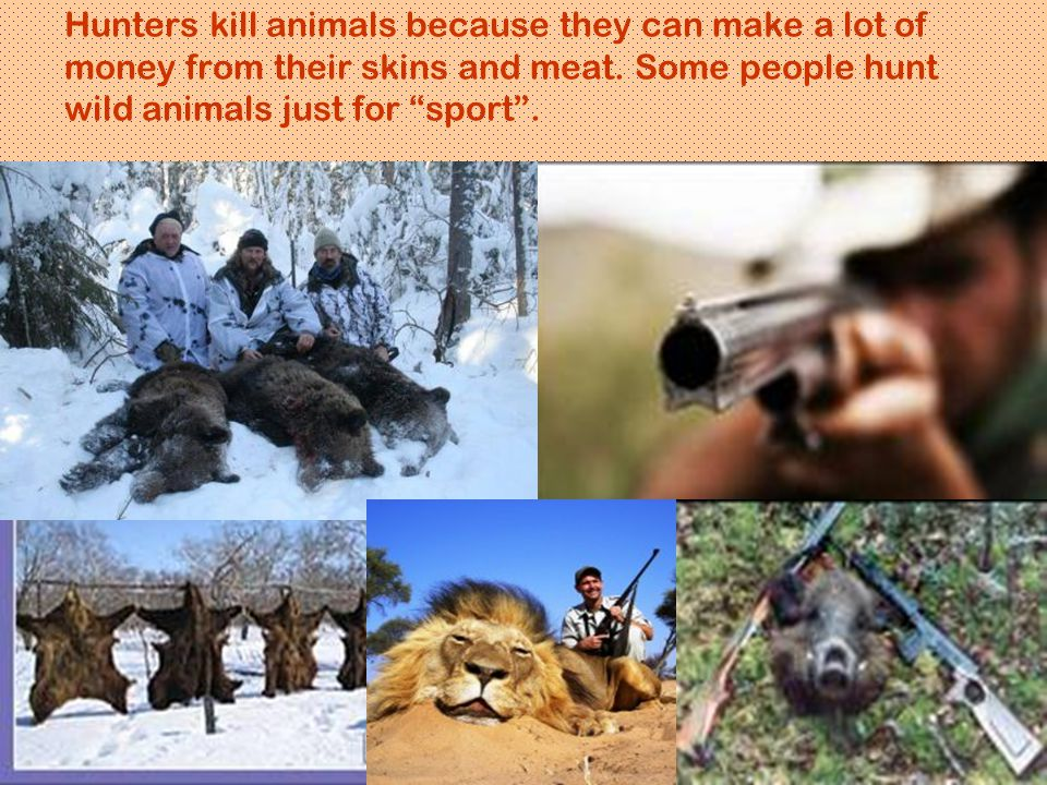 "Hunters kill animals because they can make a lot of money from their skins and meat. Some people hunt wild animals just for ""sport""."
