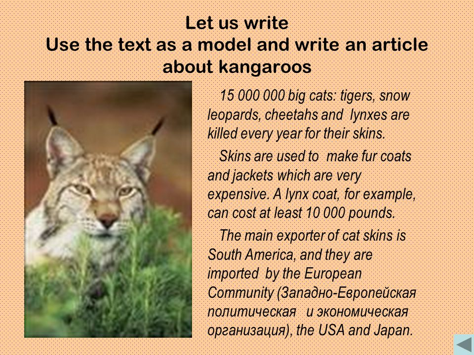 Let us write Use the text as a model and write an article about kangaroos 15 000 000 big cats: tigers, snow leopards, cheetahs and lynxes are killed e