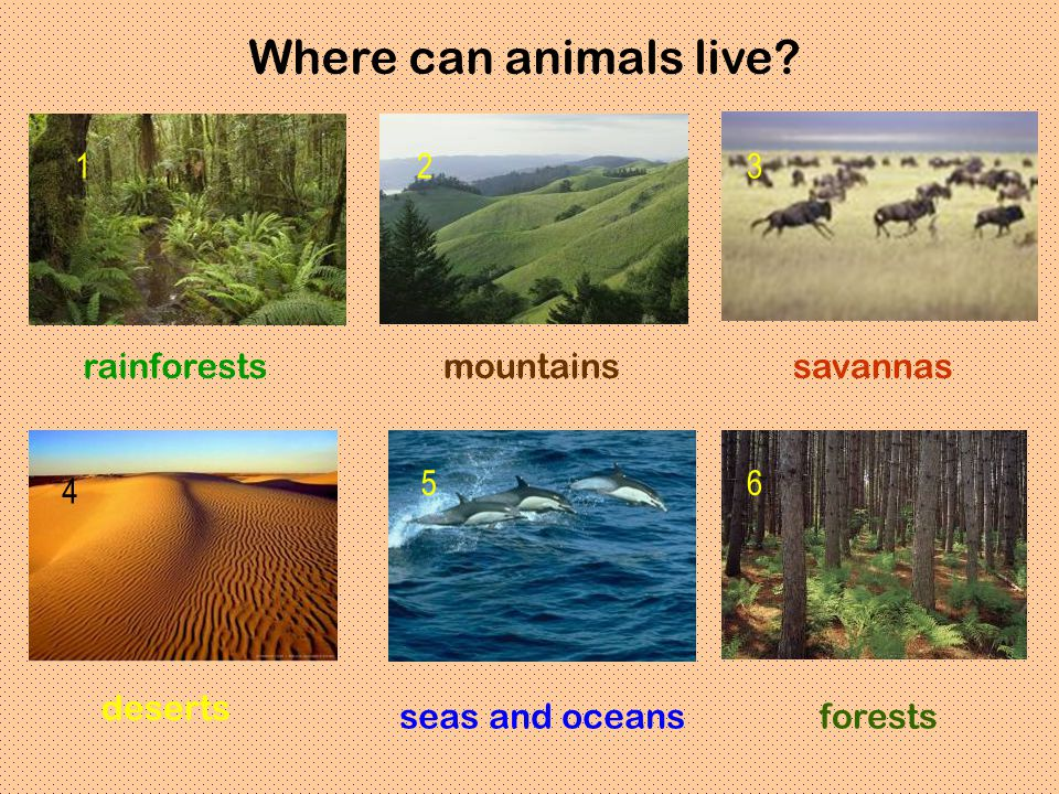 Where can animals live rainforests savannas mountains deserts seas and oceans forests 123 4 56