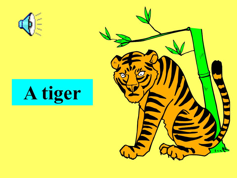 (a) They are tigers. (b) It is a tiger. 2. What is it?