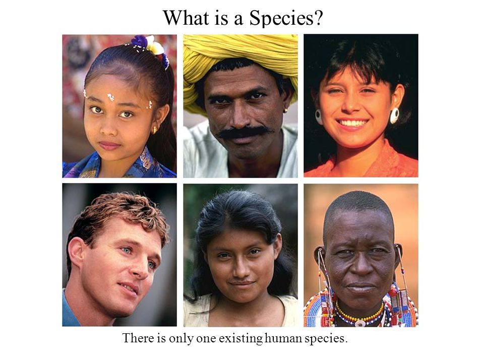 What is a Species There is only one existing human species.