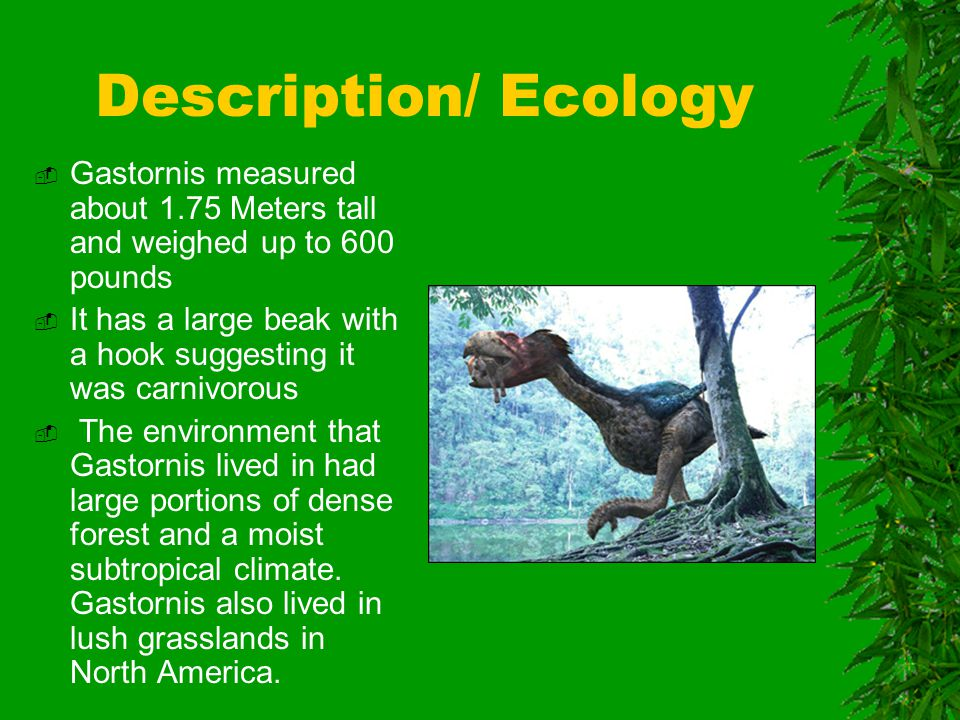 Description/ Ecology  Gastornis measured about 1.75 Meters tall and weighed up to 600 pounds  It has a large beak with a hook suggesting it was carnivorous  The environment that Gastornis lived in had large portions of dense forest and a moist subtropical climate.