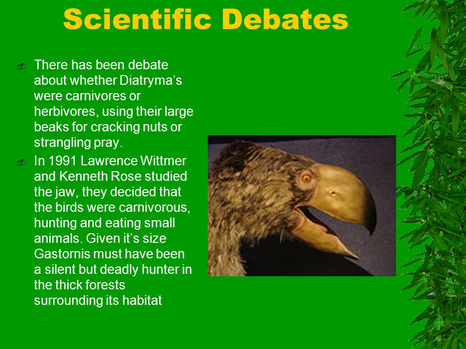 Scientific Debates  There has been debate about whether Diatryma's were carnivores or herbivores, using their large beaks for cracking nuts or strangling pray.