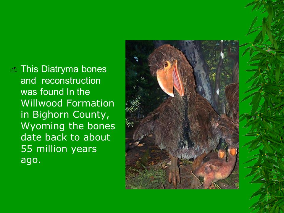  This Diatryma bones and reconstruction was found In the Willwood Formation in Bighorn County, Wyoming the bones date back to about 55 million years ago.