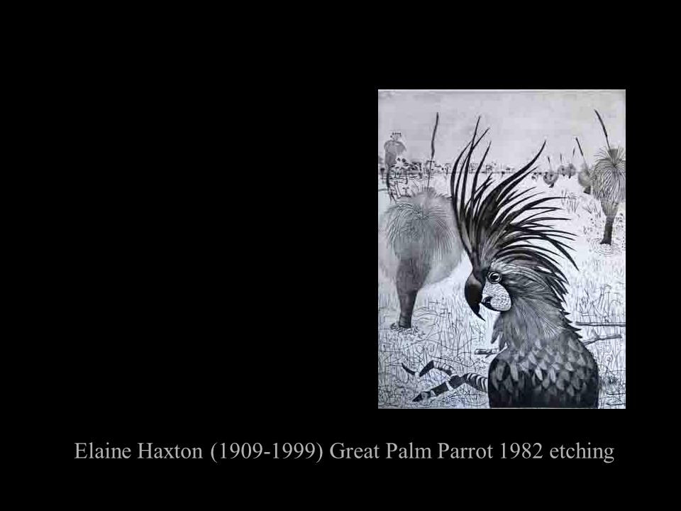 Elaine Haxton (1909-1999) Great Palm Parrot 1982 etching
