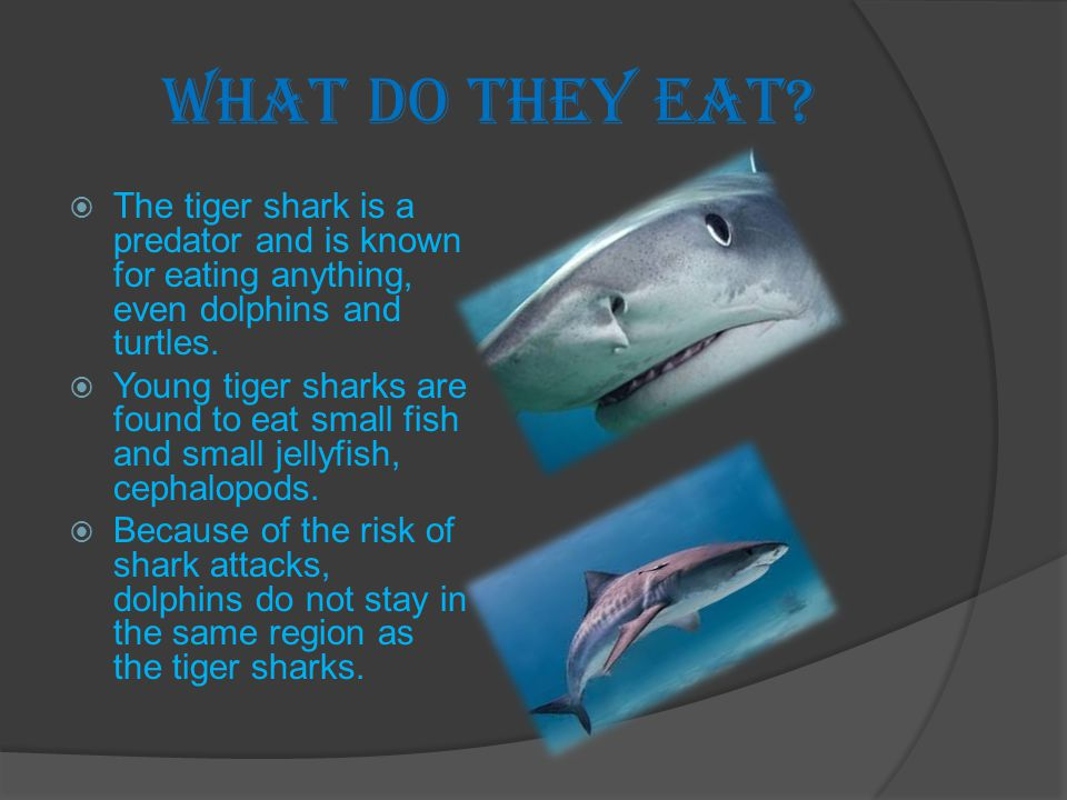 Sharks and Human  Tiger shark has a very good eyesight and smell.