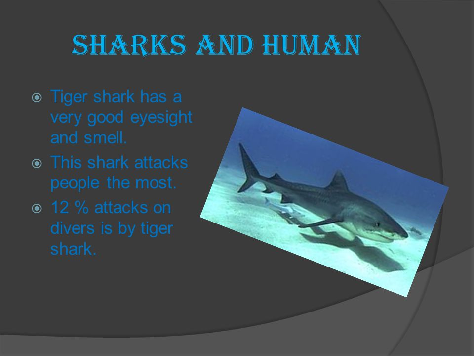 Sharks and Human  Tiger shark has a very good eyesight and smell.  This shark attacks people the most.  12 % attacks on divers is by tiger shark.
