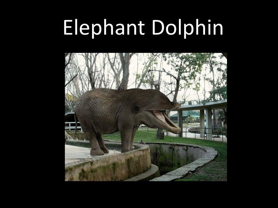 Elephant Dolphin